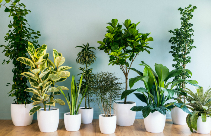 Growing Houseplants