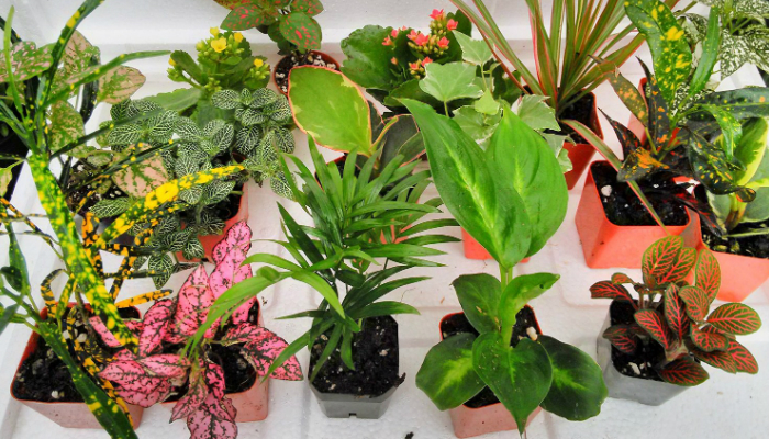 Best Indoor Plant - Smart Home Keeping