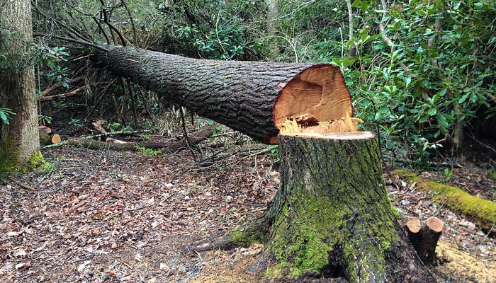 Image result for cut down a tree